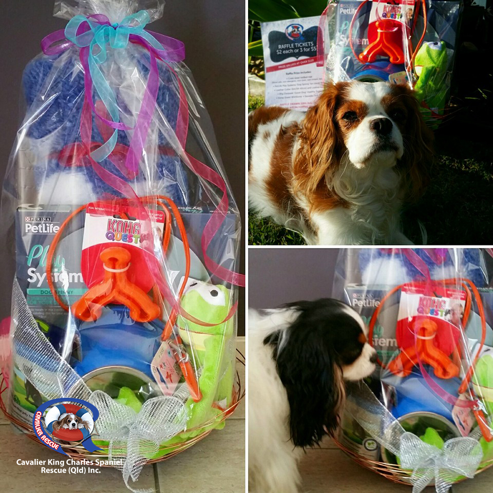 Win this dog prize valued at over $110 for Cavalier King Charles Spaniel Rescue (Qld) Inc.