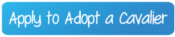 Apply to Adopt a Cavalier