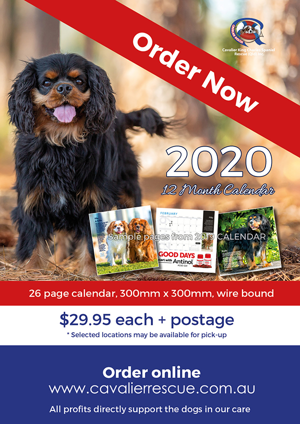 Cavalier Rescue Calendar for 2020 is now on sale